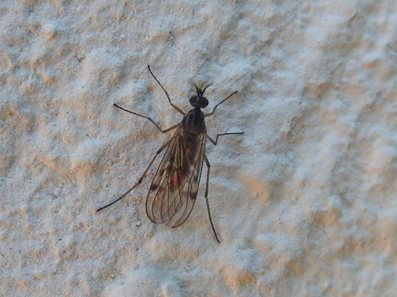 nordpasdecalais.observation.org/fotonew/1/26355501.jpg